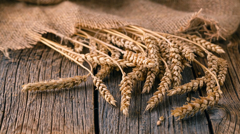 Care sunt cele mai importante beneficii ale secarei?